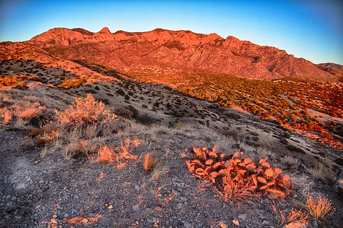 sunset cactus albuquerque tokina abq hdr sandia sandias noclouds flickrfriday sandiamountians whennightfalls