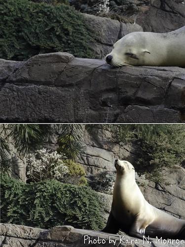SealDiptych1.jpg
