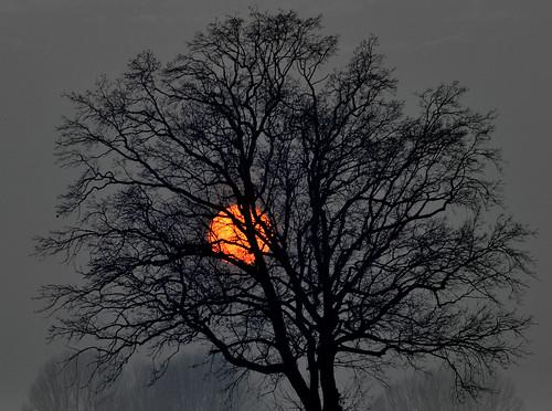 light sunset red sky sun tree night tramonto cloudy albero rosso luce