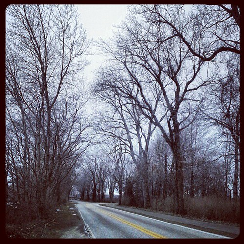 #presqisle #lakeerie #erie #eriepa #eriegram #trees #instanature #instatrees last days of winter