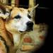 I lost my Loving dog