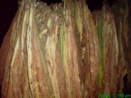 Tobacco (2)