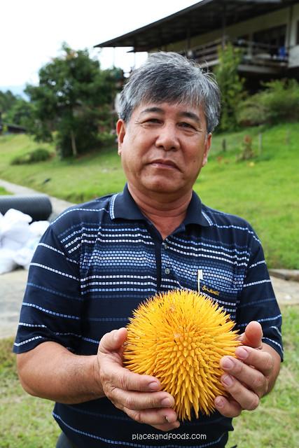 sarawak orange durian