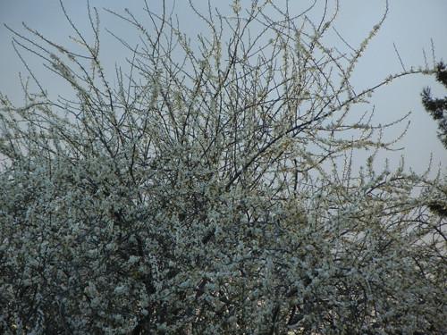 DSCN6055 - Spring Flowers