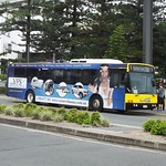 Surfside Bus Lines Gold Coast