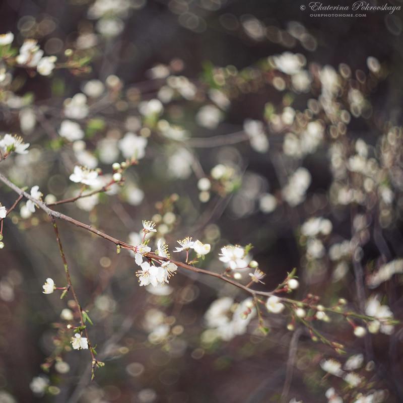 spring_ya_02