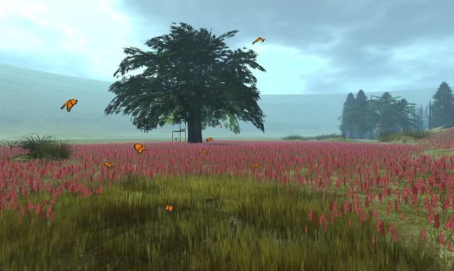 Noweeta Grassland - 01