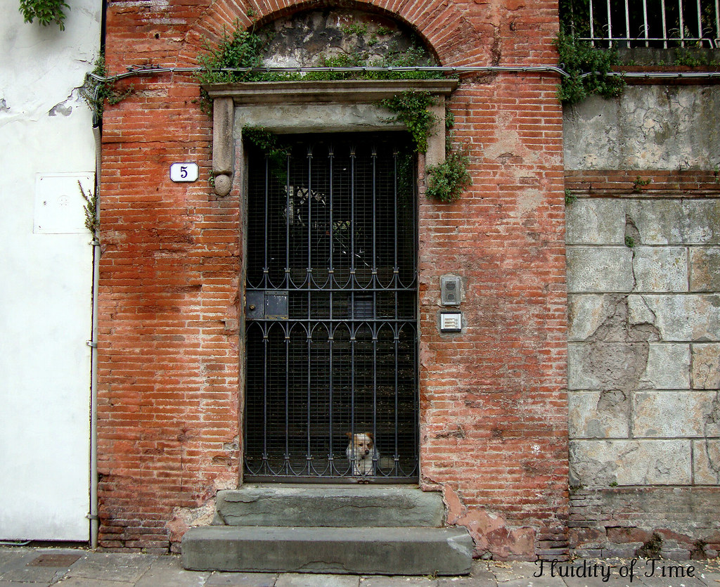 Lucca door with dog.jpg