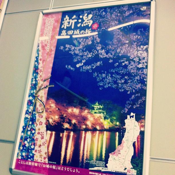 Photo:【告白】高田城の桜って、実は見たことないんだよな… By naohisa1971