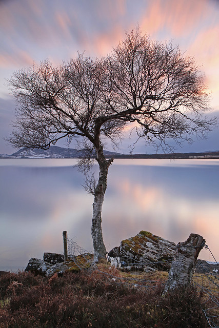 The Wee Bare Tree.