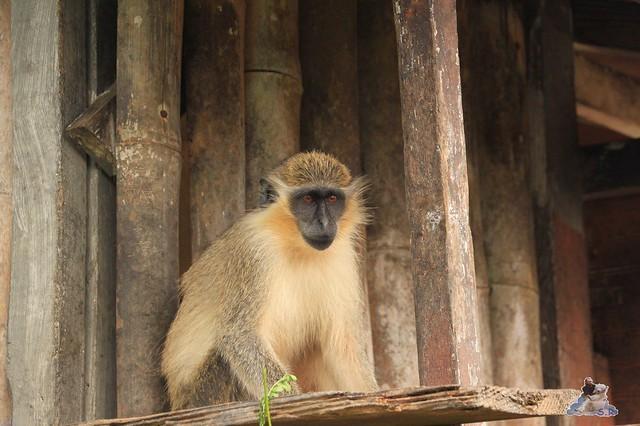 Hurraaaaaaa ein Affe :-)