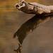 Common Kingfisher by Supriya & Subharghya