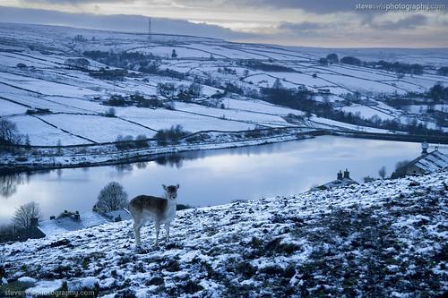 uk sunset england snow water landscape europe bradford britain yorkshire january reservoir deer oxenhope leeming 2013 brontecountry jstevesw samsungnx5