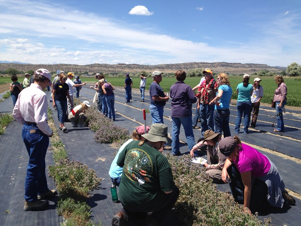 Observing pollinators at Bridger Plant Materials C…