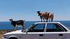 Kreta 2011-1 033
