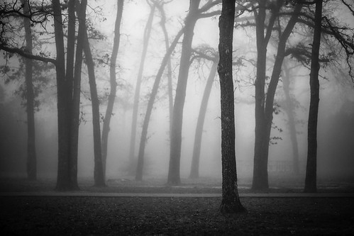 2013 harriscounty houston houstonphotographer january mabrycampbell tx texas us usa unitedstates unitedstatesofamerica blackandwhite branches bw dark fineartphotographer fineartphotography fog foggy image intimatelandscape landscape moody nature photo photograph photographer photography trees trunks woods f28 january202013 20130120xb9a0076 100mm ¹⁄₈₀₀sec 100 ef100mmf28lmacroisusm fav10 fav20 fav30