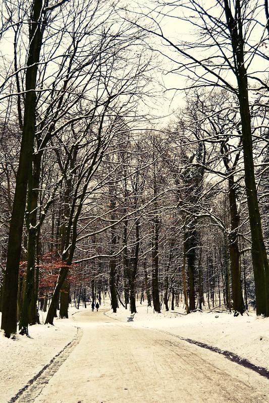 bois avec de neige
