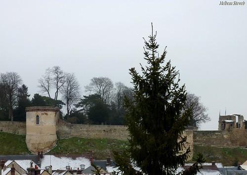 Arbres hiver durocasses