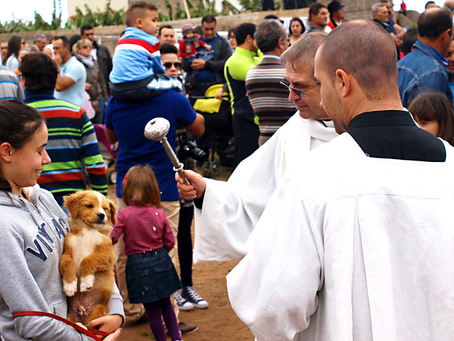 Blessing the animals, San Abad, Buenavista del Norte, Tenerife