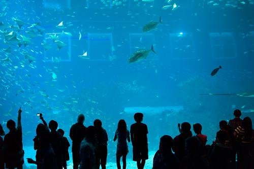 Crowds watching marine life at SEA Aquarium at Sentosa