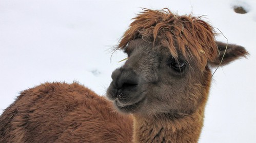 Alpaka -  Hi !! Click F11 - stream is slideshow optimated