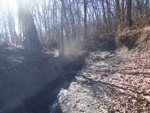 illinois woods trace godfrey savanna