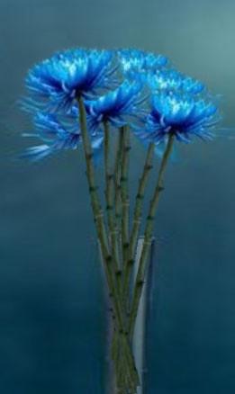 Blue long stem flower arrangement flickr photo sharing for Blue long stem roses
