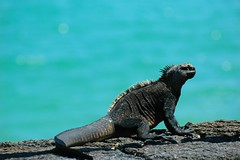 Galapagos ( 2 ) 加拉帕戈斯群岛
