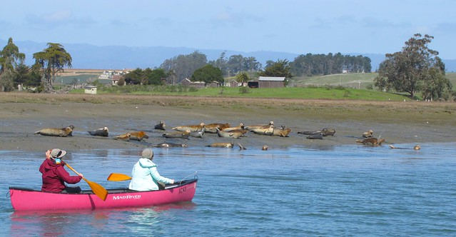 Kayakers on Elkhorn Slough