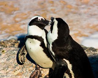 Penguin Love