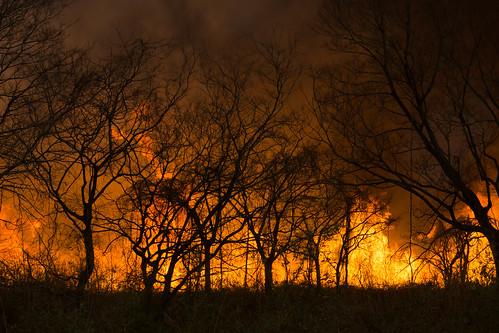日本 栃木県 渡良瀬遊水地 栃木市 ヨシ焼き