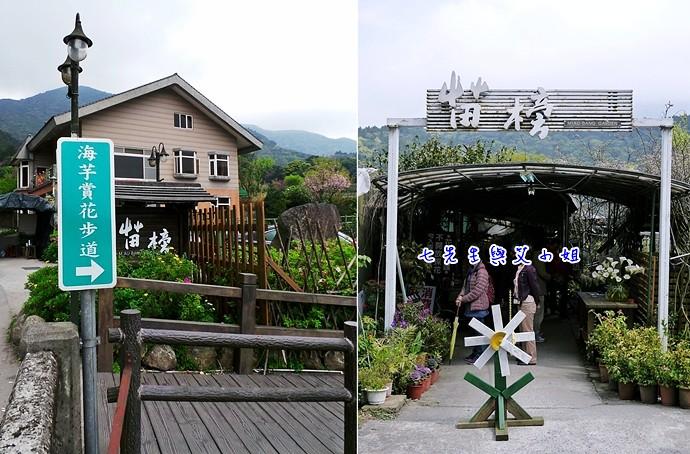 2 苗榜海芋園