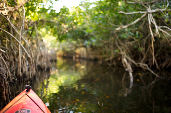 RYALE_Everglades-074