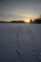Otter Tracks_44586.jpg by Mully410 * Images
