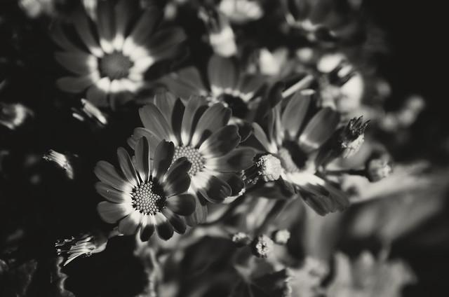 flores ani mendez