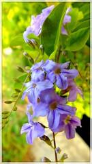 bunga pinggir selokan