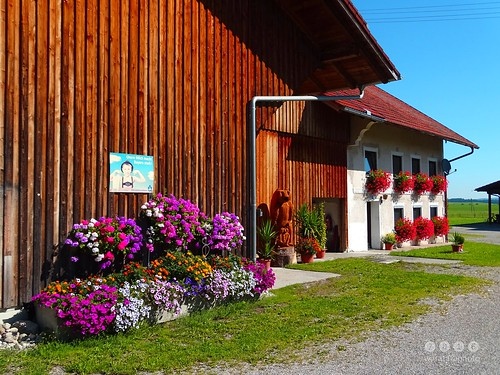 Bauernhof in Albisried im Ostallgäu-  Farm in Albisried in Ostallgäu