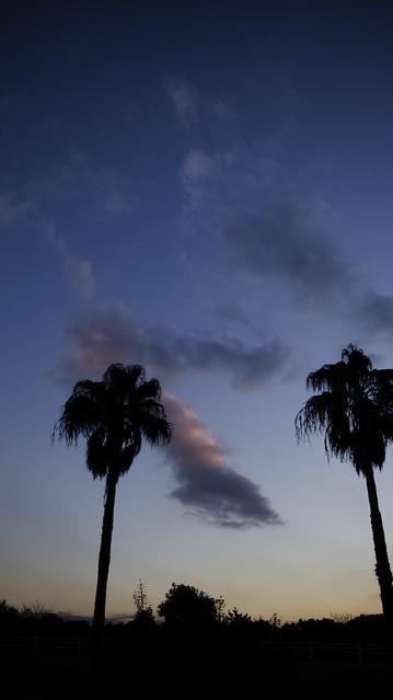 Miami Dreaming in Kasai