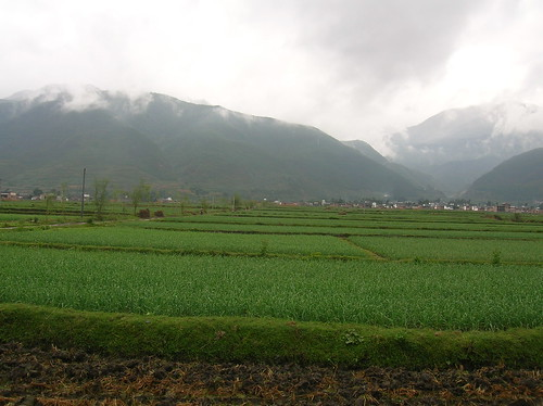 bike ride rice fields china