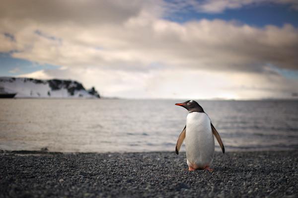 RYALE_Antarctica_Penguins-6