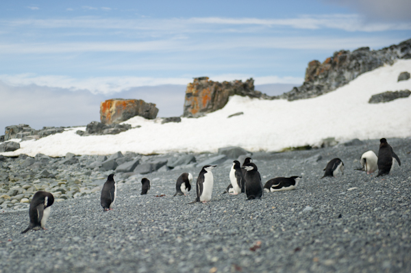 RYALE_Antarctica_Penguins-5