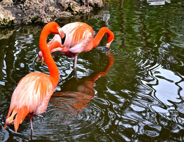 Wildlife animal sanctuary flamingo gardens in south florida - Flamingo gardens fort lauderdale ...