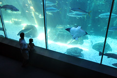 A Day At The Two Oceans Aquarium - Things to do in Cape Town