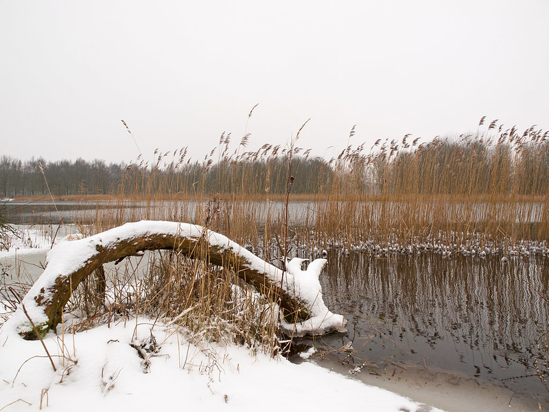 Winter in the Netherlands 5