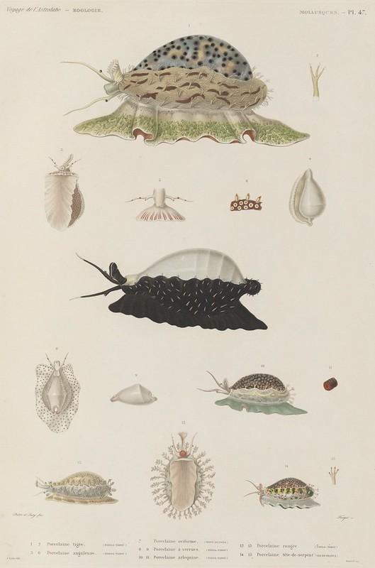 Voyage de la Corvette (atlas) by Jules Dumont d'Urville, 1833 103