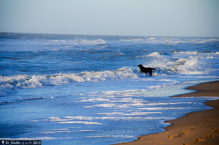 dr_dudin: Январский фотосинтез на Северном море