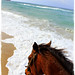 Only the Horses by Robertina Boi