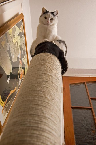 Now that's what I call a scratching post!