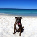 styx at the dog beach - Panorama (iPhone 5)