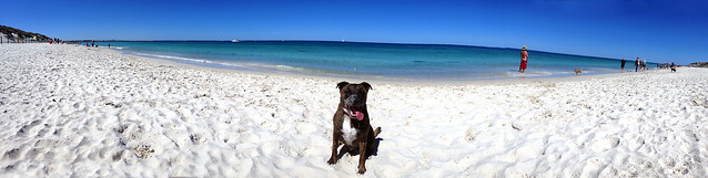styx at the dog beach - Panorama (iPhone 5)